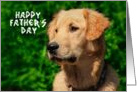 Happy Father's Day, Golden Retriever Photo card