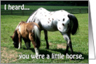 A Little Horse - Get Well card