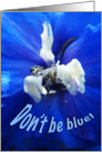 Don't Be Blue Thinking of You Card