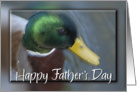 Mallard Duck, Father's Day card