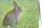 Bunny, Happy Spring! card