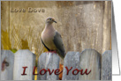 The Love Dove I Love You card