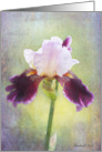 Purple Bearded Iris Flower - All Occasion Note Card