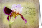 Happy Birthday - Bearded Iris Card