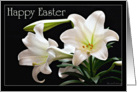 Happy Easter - Easter Lillie's on a black background card
