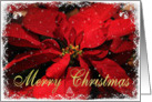 Merry Christmas - Poinsettia with snowy frame card