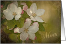 Apple Blossoms -Mom - Mother's Day Card