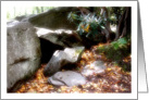 Forest Rocks And Mountain Laurel Blank Note Card