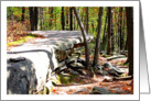 Blank Note Card Forest Rocks And Fallen Leaves Early Fall Season Photograph card