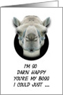 Boss's Day Greetings Funny Camel Humorous card