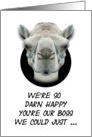 Boss's Day Greetings From Group Funny Camel Humorous card