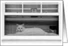 White Cat in the Window with Dog Inside Blank Note Card