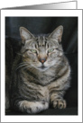 Ozzie the Tabby Cat Blank Note Card