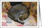 Fritz the Tabby Cat Asleep Blank Note Card