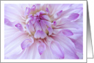 Lavendar Dahlia Flower Close-up Blank Note Card