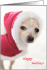 Santa Chihuahua Dog card