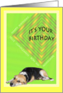 Cute Dog Birthday Card