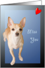 Cute Small Dog I Miss You Card