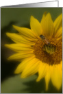 Sunflower and Bee card