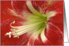 Red Hibiscus Valentine Card