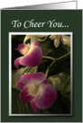 Cheerful Purple Orchids card