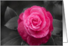 Sympathy Pink Camellia Flower on Black and White card