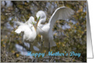 Mother's day, Egrets Nest Building card