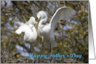 Father's day, Egrets Nest Building card