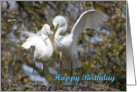 Birthday, generic, Egrets Nest Building card
