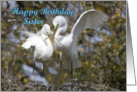 Sister birthday, Egrets Nest Building card