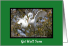 A pair of Great Egrets building their nest get well soon Card