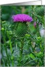 Scottish Purple Thistle Blank Note Card