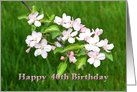 Birthday 40th Apple Blossoms Card