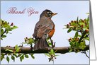 Robin Thank You In Apple Tree Card
