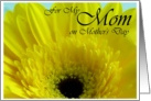 For My Mother on Mother's Day Yellow Gerber Daisy card