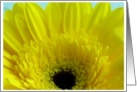 Yellow Gerber Daisy card