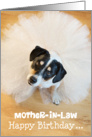 Mother-in-Law Humorous Birthday Card - Dog Wearing a Tutu card
