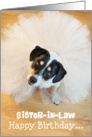 Sister-in-Law Humorous Birthday Card - Dog Wearing a Tutu card