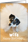 Wife Humorous Birthday Card - Dog Wearing a Tutu card