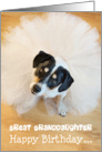 Great Granddaughter Humorous Birthday Card - Dog Wearing a Tutu card