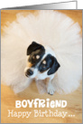Boyfriend Humorous Birthday Card - Dog Wearing a Tutu card