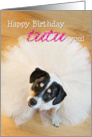 Humorous Birthday Card - Dog Wearing a Tutu card