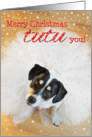 Humorous Christmas Card - Dog Wearing a Tutu card