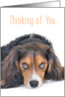 Thinking of You Card - Beautiful Dog with Soulful Eyes card