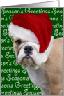 Christmas Card - English Bulldog card
