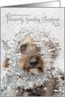 Humorous Christmas Card - Dog Wearing Tinsel card