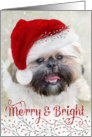 Cute Christmas Card - Shih Tzu in Santa Hat - Merry and Bright card