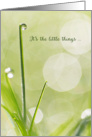 Sympathy Thank You Card - Dewdrop on a Blade of Grass card