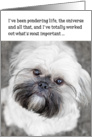 Funny Birthday Card - Shih Tzu Pondering Life and The Universe card