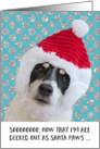 Funny Christmas Card - Dog Santa Paws Wondering about Cookies card